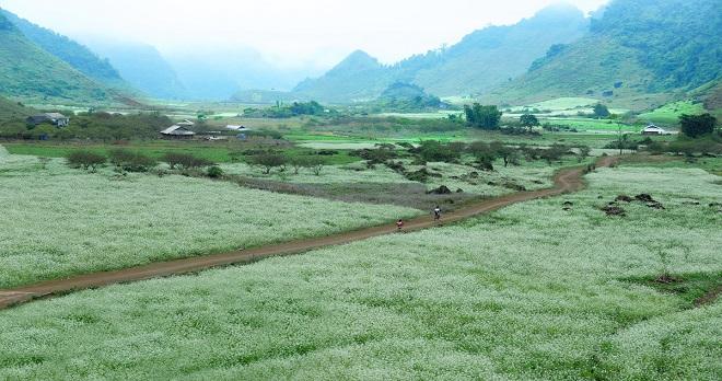Voyage au haut plateau Moc Chau Vietnam