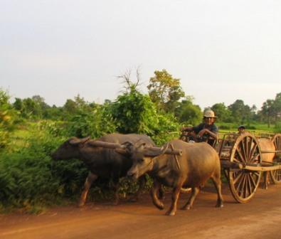 Kratié au Cambodge - voyage Vietnam Cambodge