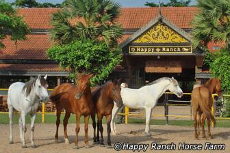 The Happy Ranch Horse Farm