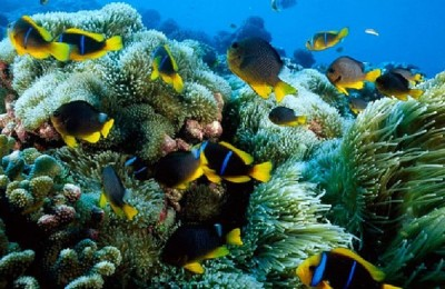 Plongée sous marine à Phu Quoc
