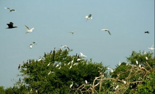 réserve de cigognes de Bang Lang